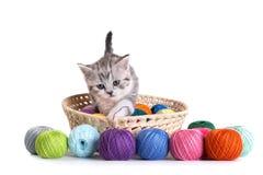 Juegos del gatito en un fondo blanco Imágenes de archivo libres de regalías