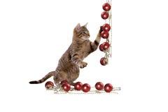 Juegos del gato con las decoraciones de la Navidad Imágenes de archivo libres de regalías