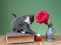 Juegos del gato con una manzana y las flores Imágenes de archivo libres de regalías