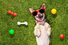 Juegos del perro con el dueño que mira para arriba imágenes de archivo libres de regalías