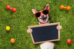 Juegos del perro con el dueño que mira para arriba fotos de archivo libres de regalías