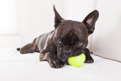 Juegos del perro con la bola imagenes de archivo