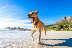 Juegos del perro en agua Foto de archivo libre de regalías