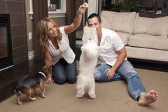 Juegos jovenes de los pares con sus perros caseros Imagenes de archivo