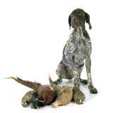 Juegos y perro de la caza Fotografía de archivo