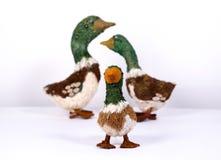 Juegue el pato Fotos de archivo libres de regalías