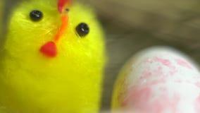 Juegue el pollo entre los huevos de codornices, granja del pájaro