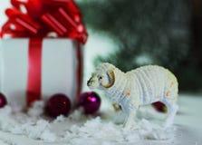 Juegue las ovejas y las cajas con los regalos en fondo de la Navidad Fotos de archivo libres de regalías