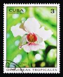 Juffrouw van Vanda Joaquin var Nam marie, Orchideeën serie, circa 1973 toe royalty-vrije stock afbeeldingen