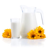 Jug and Glass of fresh milk and yellow flowers Stock Images