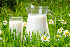 Jug and glass of milk over green grass Royalty Free Stock Images