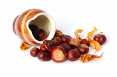 A jug and horse-chestnut seeds Royalty Free Stock Image
