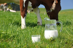 Jug of milk. Against herd of cows. Emmental region, Switzerland stock images