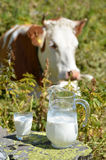 Jug of milk. Against herd of cows. Jungfrau region, Switzerland royalty free stock photos