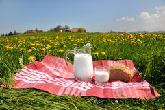 Jug of milk and bread on the spring meadow Royalty Free Stock Photo