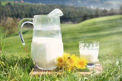 Jug of milk Royalty Free Stock Photo