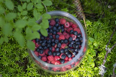 The jug with raspberries and blueberries on the moss stock photo