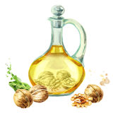 Jug with walnut oil. Watercolor  illustration Stock Photos