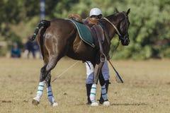 Jugador de la Polo-cruz del caballo Fotos de archivo
