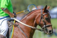 Jugador del caballo de Polocrosse Fotografía de archivo libre de regalías