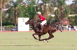 Jugador masculino del polo Imagen de archivo
