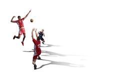 Jugadores de voleibol profesionales del árbol aislados en blanco Imagen de archivo libre de regalías