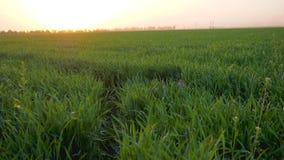 Jugando en naturaleza, niño lindo que oculta en hierba verde en campo en fondo de la posluminiscencia anaranjada metrajes