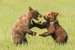 Jugar a Cubs fotografía de archivo libre de regalías