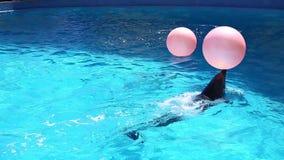 Jugar el delfín