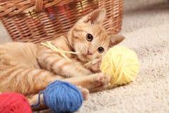 Jugar el gato Fotos de archivo