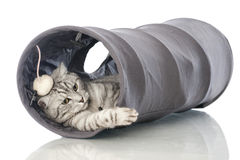 Jugar el gato Foto de archivo libre de regalías