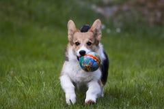 Jugar el perrito Fotos de archivo libres de regalías