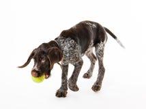 Jugar el perrito Imagen de archivo libre de regalías