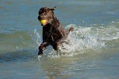 Jugar el perro Imagenes de archivo