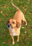 Jugar el perro fotografía de archivo libre de regalías