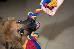 Jugar el perro Foto de archivo libre de regalías