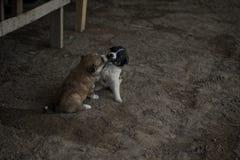 Jugar perritos imagen de archivo libre de regalías