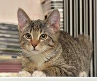 Jugendlich Kätzchen 3 Monate Lizenzfreies Stockbild