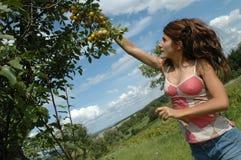 Jugendlich Mädchensammelnfrucht stockfotos