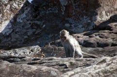 Jugendlicher Affe nahe Pool im Boden des Preah- Viheartempelkomplexes Lizenzfreies Stockfoto