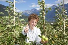 Jugendlicher mit den Äpfeln, die oben Daumen aufwerfen Stockbild