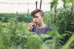 Jugendlichjunge, der frische ausgewählte Tomate isst lizenzfreies stockbild
