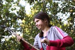 Jugendlichmädchen zupfen Ernteäpfel vom Baum mit speziellem Pfosten Stockfotografie