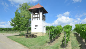 Jugenheim,Rheinhessen,Germany. Watchtower and picnic Area in Vineyard of Jugenheim in Wine region of Rheinhessen,Rhineland-Palatinate,Germany royalty free stock photos