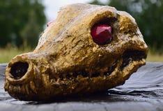 Jugger skull Royalty Free Stock Photo