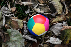 Juggling ball on an autumn leaves Royalty Free Stock Image