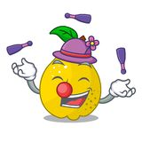 Juggling sweet quince isolated on mascot cartoon. Vector illustration royalty free illustration
