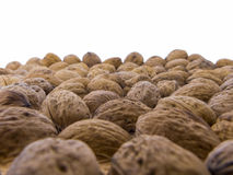 Juglans regia - tasty walnuts Stock Images