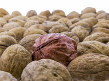 Juglans regia - tasty walnuts Royalty Free Stock Photo