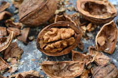 Juglans regia walnut Stock Image